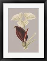 Framed Botanical Cabinet VIII