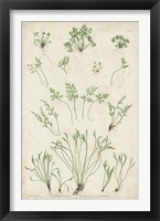 Framed Bradbury Ferns I