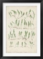 Framed Bradbury Ferns III
