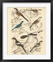 Framed Avian Habitat V