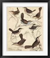 Framed Avian Habitat VI