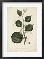 Framed Medicinal Botany I