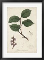 Framed Medicinal Botany III