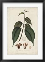 Framed Medicinal Botany IV