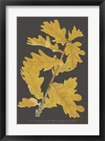 Framed Trees & Leaves IV