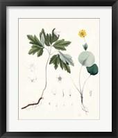 Framed Berge Botanicals III