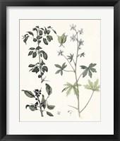 Framed Berge Botanicals IV