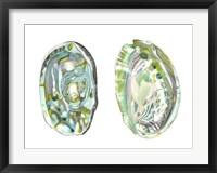 Abalone Shells II Framed Print