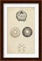 Framed Cylindrical Shells II