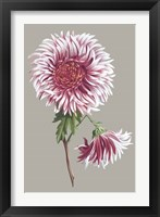 Framed Chrysanthemum on Gray III
