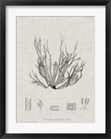 Framed Charcoal & Linen Seaweed I