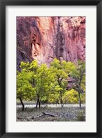 Framed Canyon Cottonwoods