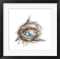 Framed Bird Nest Study II