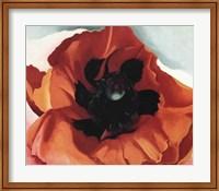 Framed Poppy