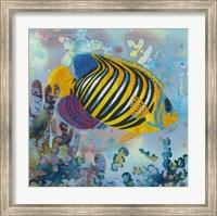 Framed Regal Angel Fish