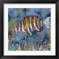 Framed Harlequin Tusk Fish