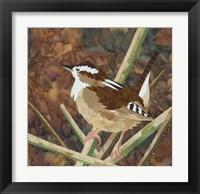 Framed Marsh Wren