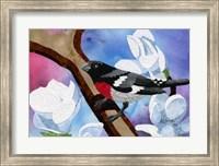 Framed Rose Breasted Grosbeak