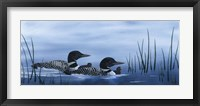 Framed Family of Loons