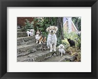Framed Furry Family