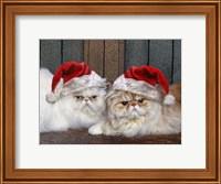 Framed Mad Cats