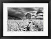 Framed Lone Tree, Dingalan