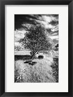 Framed Lonesome
