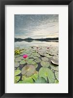 Framed Morning Lilies