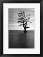 Framed Solitude