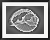 Framed Caracol Estudio 3 Xray