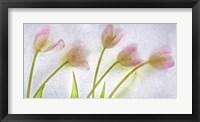 Framed Flores Congeladas 3646