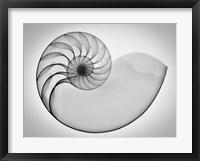Framed Nautilus Xray I