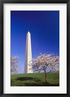 Framed Arlington Cemetery in Spring