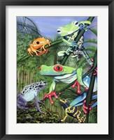 Framed Tree Frogs