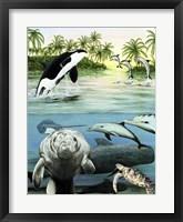 Framed Sea Life