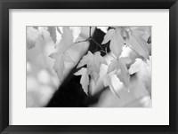 Framed Leaves and Light