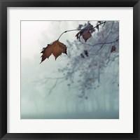 Framed November
