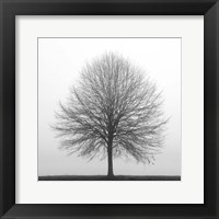 Framed Winter Trio I
