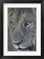 Framed Lion King