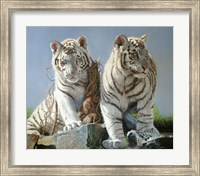 Framed White Tiger Cubs Playing