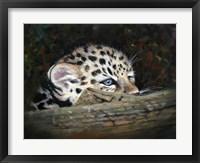 Framed Peekaboo Amur Leopard Cub