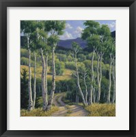 Framed Summer Aspen