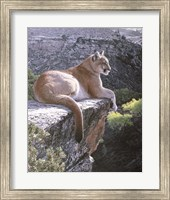 Framed Cougar Country