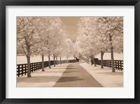 Framed Fence & Trees #2, Kentucky 08