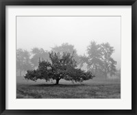 Framed Apple Tree, Southfield, Michigan 85