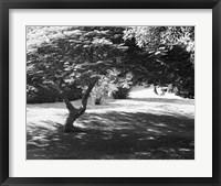 Framed Bermuda Foliage, Bermuda 94