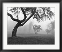Framed Morning Mist, Farmington Hills, Michigan 82