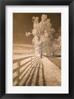 Framed Fence, Shadows, & Trees, Kentucky 08