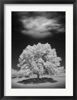 Framed Lone Tree & Cloud, Green Bay, Wisconsin 12