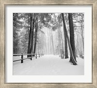 Framed Winters Path
